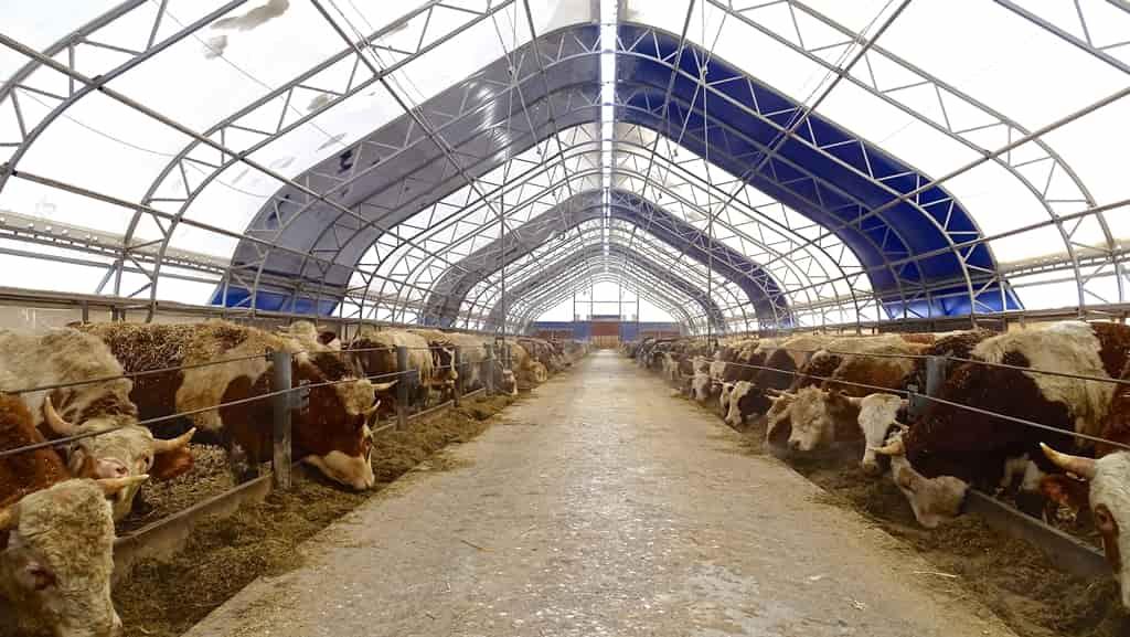 Коровники, быстровозводимое каркасно-тентовое решение